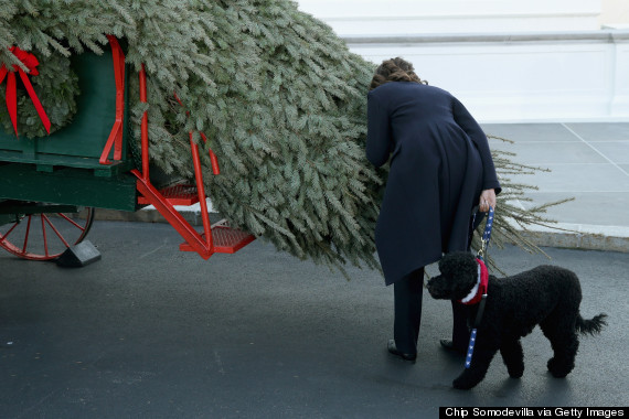 Michelle Obama Receives Official White House Christmas Tree