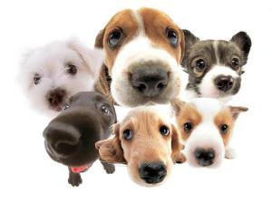 dogs-need-home-nerja-donkey-sanctuary