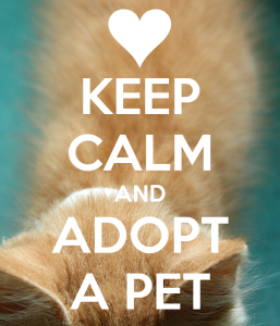 keep-calm-and-adopt-a-pet-6