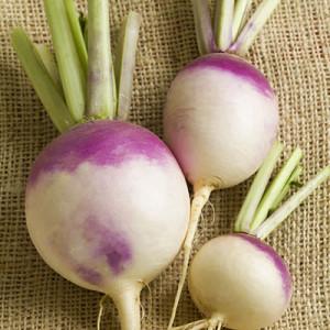 turnips-purple-top-400x400