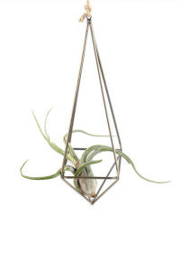 gallery-1482349103-air-plant-holder